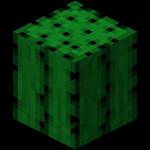 Cactus ig