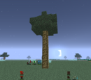 Amaranth Tree