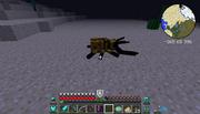 Pinch Beetle