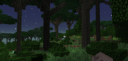 Dense twilight forest ground view