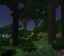 Dense Twilight Forest