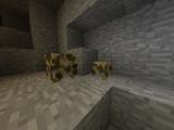 Gold Oreberry Bush