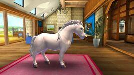 Gotland Pony T4