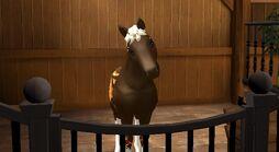 Taurus II T2 foal
