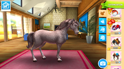 Holsteiner 002