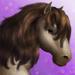 Dartmoor Pony T3