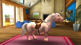 Dartmoor Pony 3