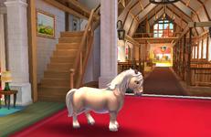 Shetland PonyT2