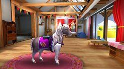 Icelandic Horse T4