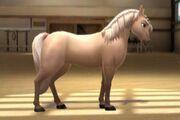 Quarterhorse T4