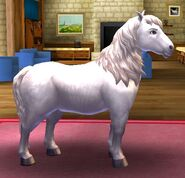 Highland pony t1 adult