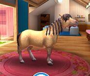 Connemara Pony T4