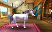 Holsteiner Tier2