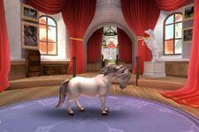 Welsh Pony T3