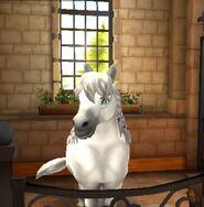 Welsh pony tier4