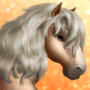 Shetland Pony T2