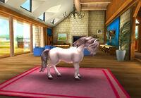 Connemara Pony T3