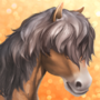 Welsh Pony T2