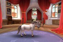 Connemara Pony T2