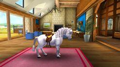 Saddled Tier 4 Welsh Pony