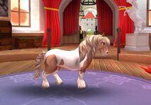 Shetland Pony T4