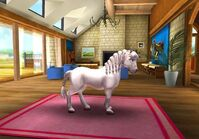 Welsh Pony T4