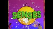 Opening Five Senses USA