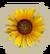 MiniGame S2 Sunflower-icon