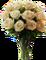 HO OrientE White Roses-icon