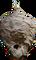 HO MTemple Hornet's Nest-icon