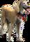 HO MBazaar Dog-icon