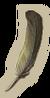 MiniGame S2 Feather-icon