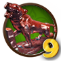 Quest Kipling's Tiger 9-icon