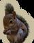 MiniGame S2 Squirrel-icon