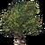 Marketplace Olive Tree-icon
