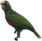HO ConqC Parrot-icon