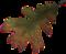 HO PBistro Dried Leaf-icon