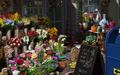 Scene Florist Shop-icon