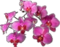 HO Machu Orchids-icon