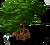 Marketplace Chinese Cypress Tree-icon