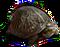 HO ConqC Turtle-icon