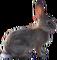 HO ConqC Rabbit-icon