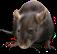 HO MTemple Rat-icon
