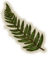 MiniGame S2 Fern-icon