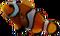 HO UWreck Clown Fish-icon