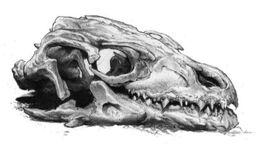 Dragon's skull by Douglas Wheatley©