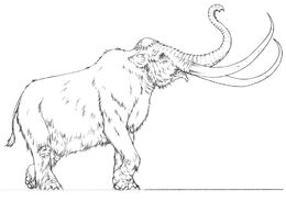Mamut by Mike S Miller