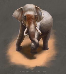 Elephant by Kevin Catalan©