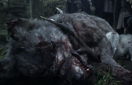 Lobo huargo muerto HBO