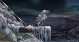 Cuervo blanco by Tiziano Baracchi, Fantasy Flight Games©